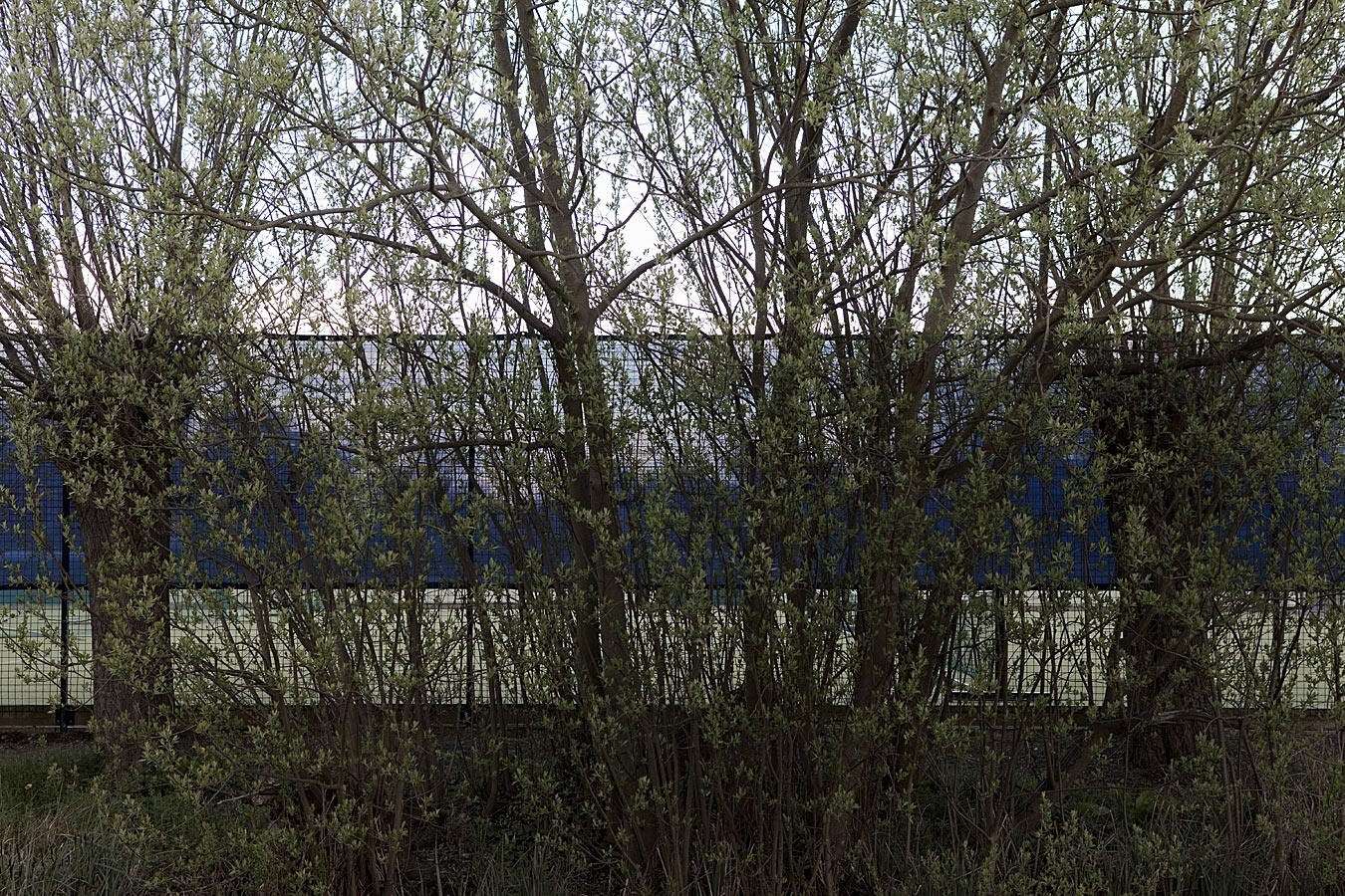 Oxford Blue Fence #2